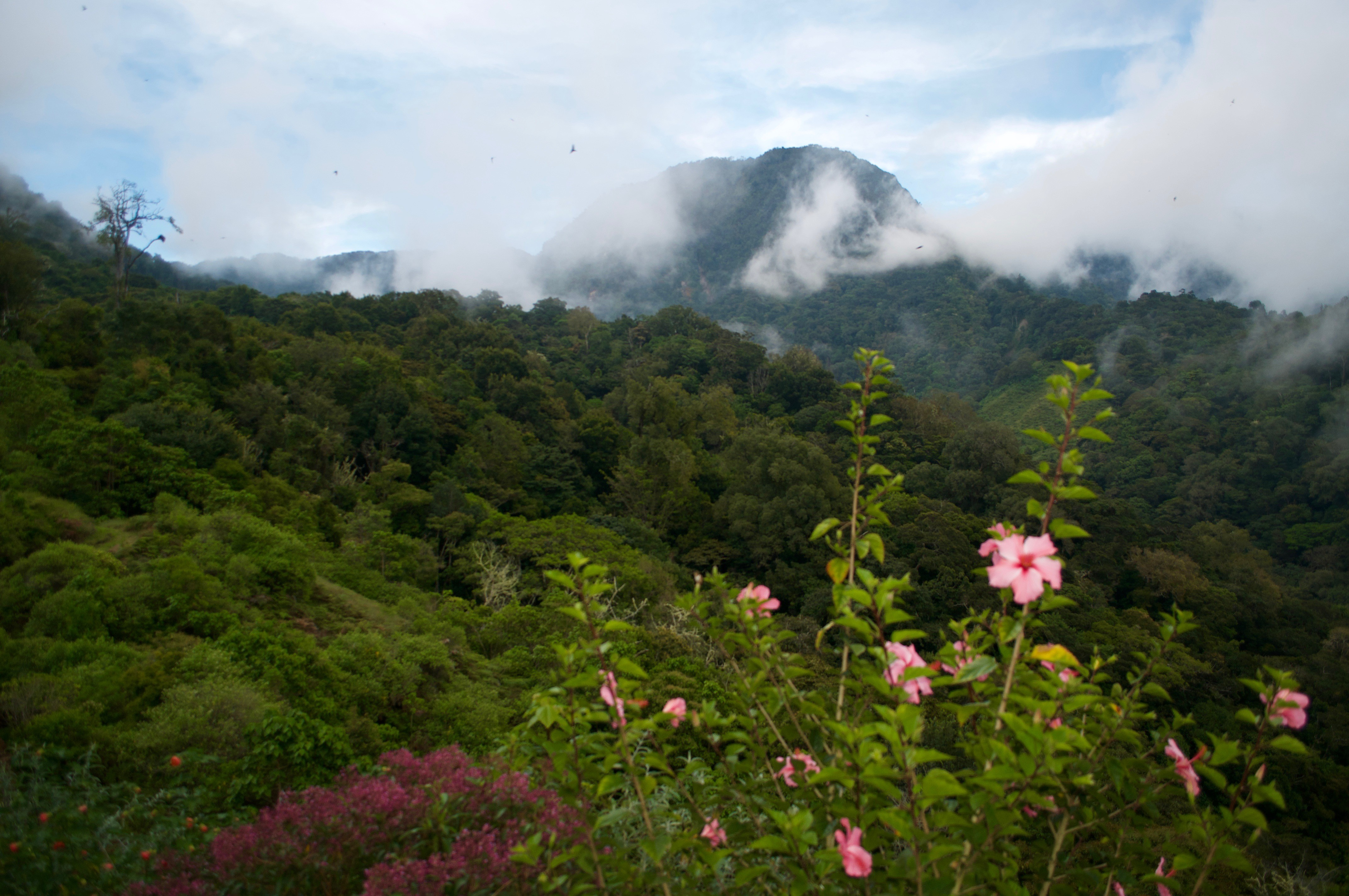 Monte Totumas – Unterwegs im Nebelwald
