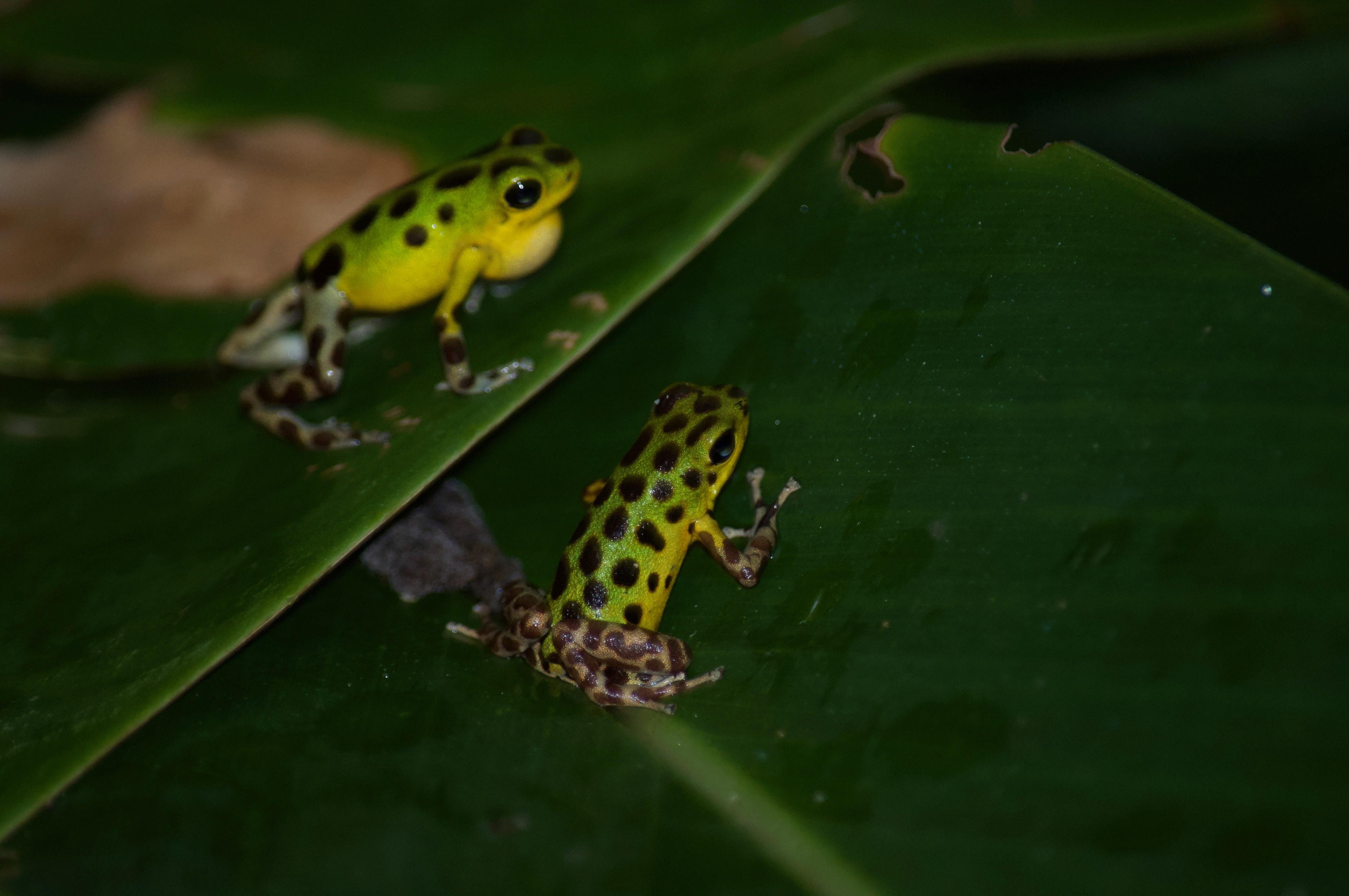 Panamas Tierwelt